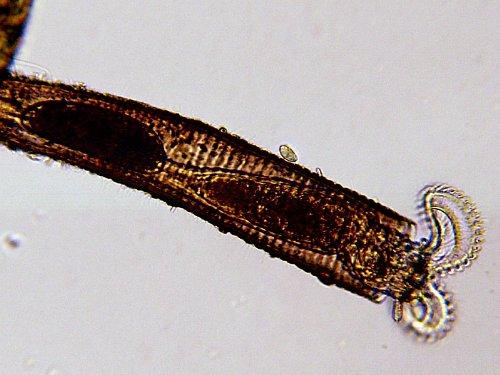 Микроскоп bresser biolux lcd Микроскопы интеренет