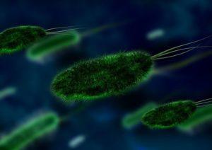Mikroskop kaufen - bacteria-106583_640-compressor